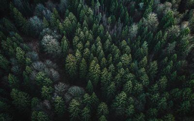 Download wallpapers green forest, coniferous forest, top